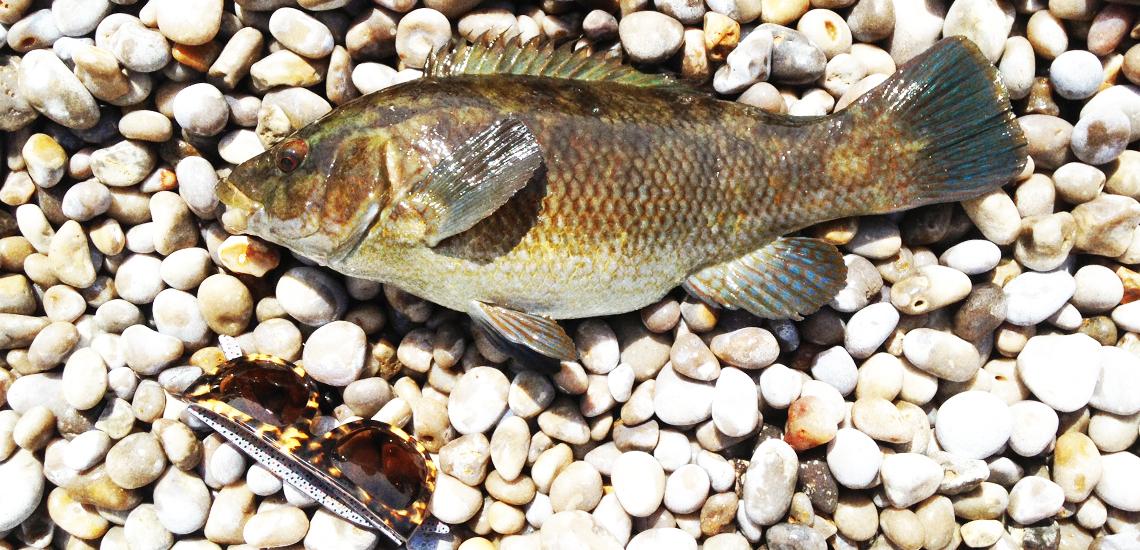 Normandi-seabass-fishing1140x550